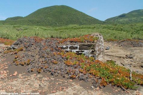 Ruines d'un ancien hameau du village de Capelo, île de Faial, Açores