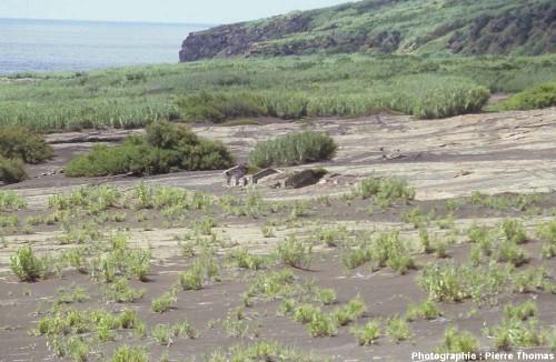 Partie Ouest d'un ancien hameau du village de Capelo, île de Faial, Açores