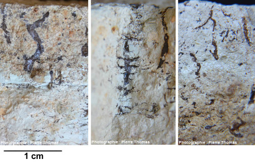 Trois gros plans sur trois empreintes de racine, Oligocène terminal / Miocène basal de Limagne, quelque part à l'Est de Clermont-Ferrand