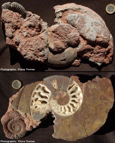 Côté «brut» et côté coupé de l'échantillon de marne ferrugineuse du Toarcien des Monts d'Or lyonnais de la figure1
