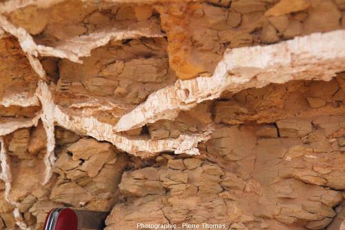 Filonnet de gypse fibreux recoupant des argiles marneuses du Miocène, oasis de Siwa (Égypte)