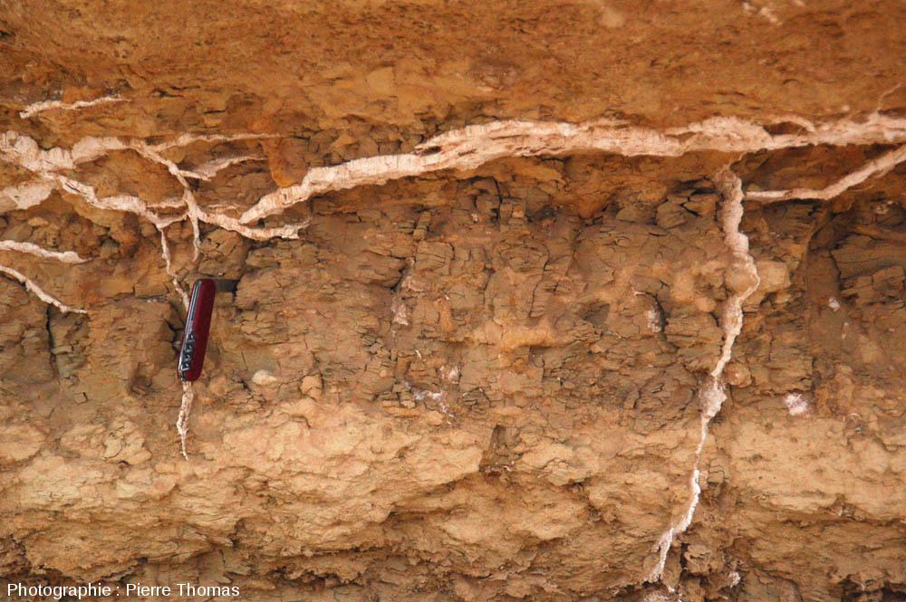Affleurement à filonnets de gypse fibreux recoupant des argiles marneuses du Miocène, oasis de Siwa (Égypte)