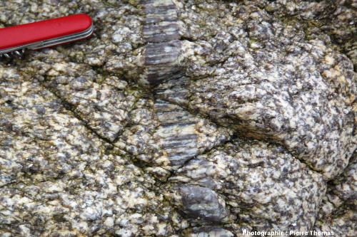 Filon de pegmatite dont les cristaux ont crû perpendiculairement à ses bordures, plage de la Mine, Piriac-sur-Mer (Loire Atlantique)