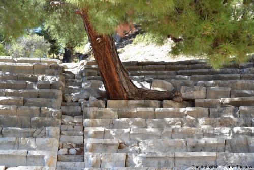 Pin dans les gradins du théâtre antique d'Arycanda (Turquie)