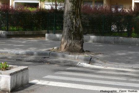 Dégâts occasionnés au trottoir et au caniveau par les racines d'un arbre, place Saint Louis, Lyon