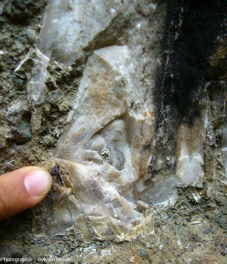 Détail d'un fragment de tronc silicifié au niveau d'un nœud montrant la structure fine du bois, coulée pyroclastique de Sipi Falls, Nord-Ouest du Mont Elgon, Ouganda