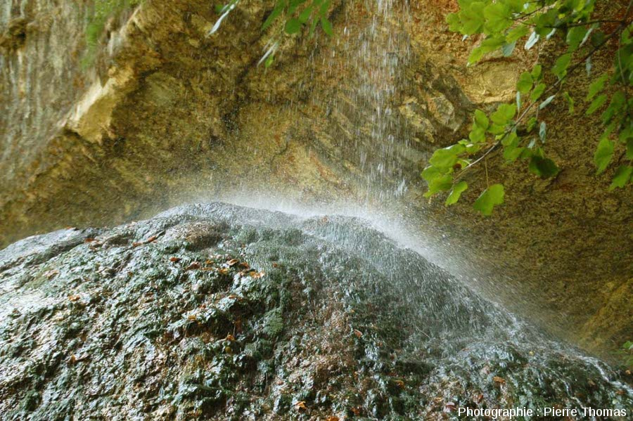 """Gros plan sur le sommet du Pain de Sucre, montrant que celui-ci est colonisé par des """"êtres chlorophylliens"""""""