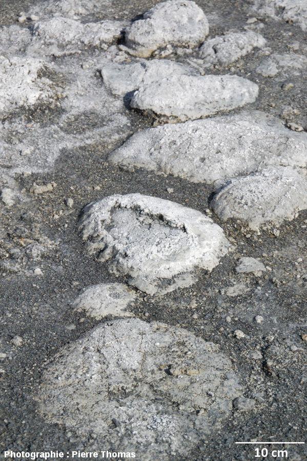 Stromatolithes en dômes, Laguna Amarga (Patagonie du Sud, Chili)
