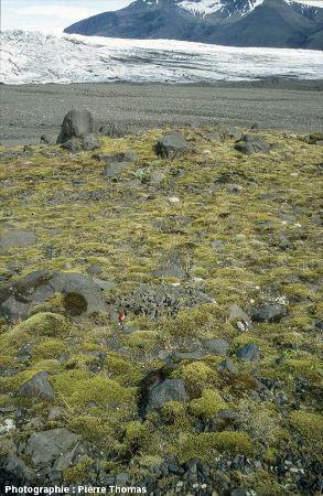 Au sommet de la moraine datant du Petit Âge Glaciaire, à quelques centaines de mètres du front actuel du glacier Vatnajökull, Islande