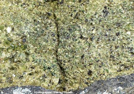 Une enclave de péridotite de la coulée du Ray Pic, Burzet, Ardèche