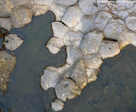 Basalte à débit polygonal dans le lit de la Bourges (Ardèche)