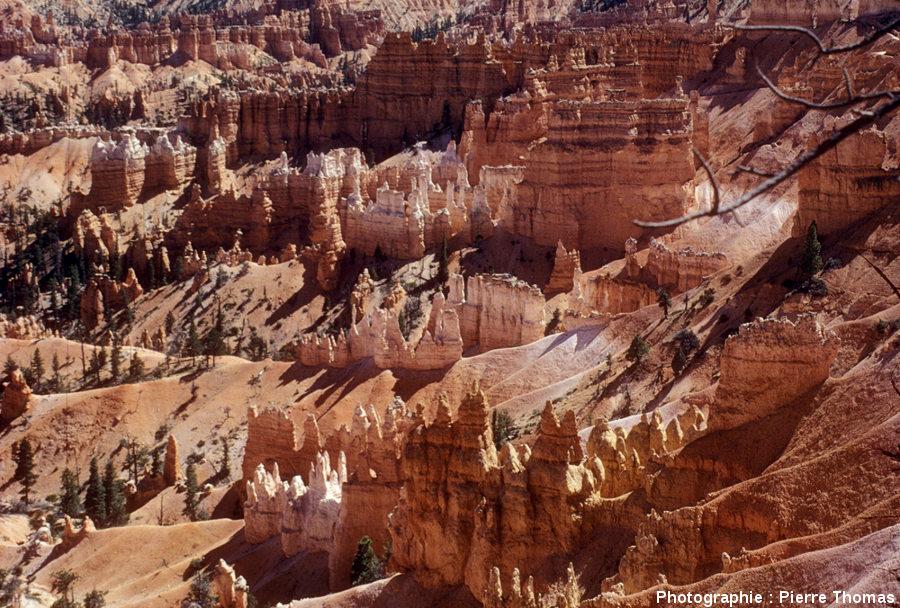 Vue estivale sur Bryce Canyon prise du rebord du plateau