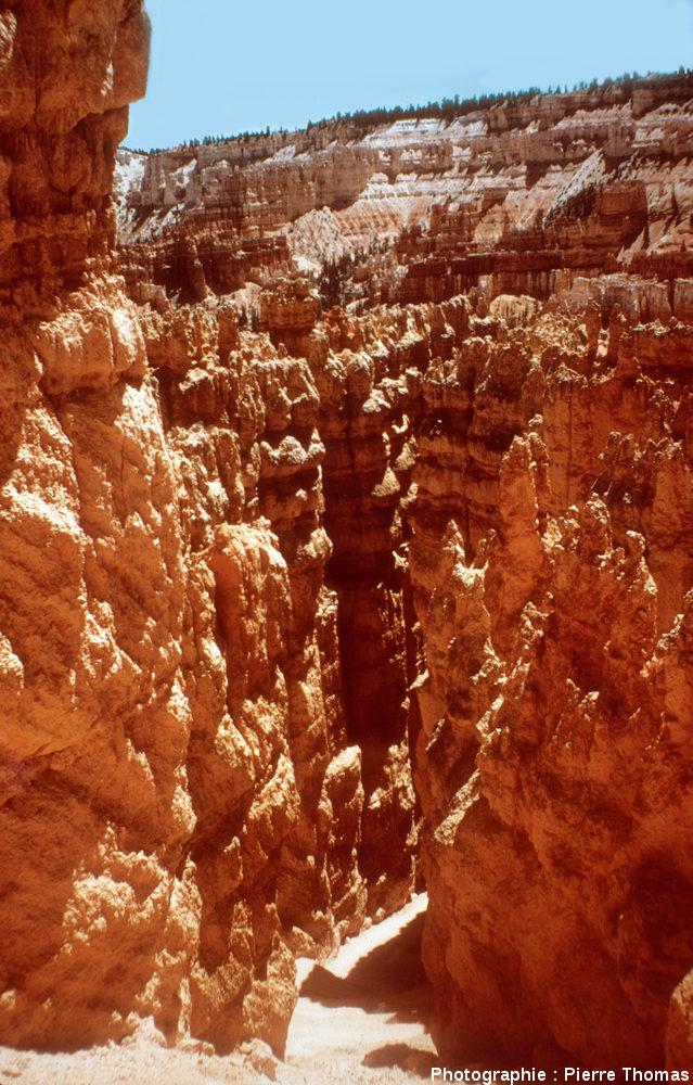 Bryce Canyon, en contrebas du rebord du plateau, en descendant entre les hoodoos
