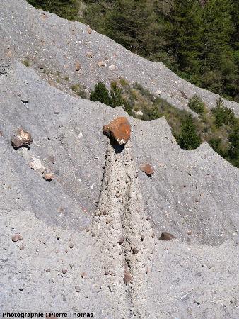 Demoiselle coiffée au béret retombant, Théus, Hautes Alpes