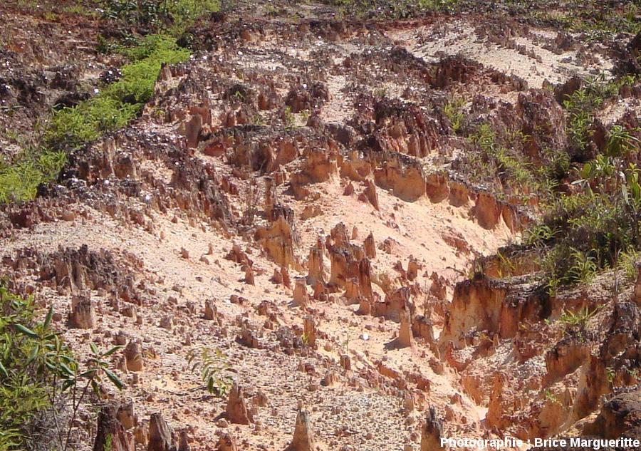 Les mini-cheminées de fée dans leur contexte: un bord de route traversant la forêt guyanaise, où travaux et déboisement ont entraîné une reprise d'érosion