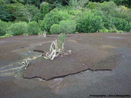 """Végétation xérophytique de la """"savane roche"""""""