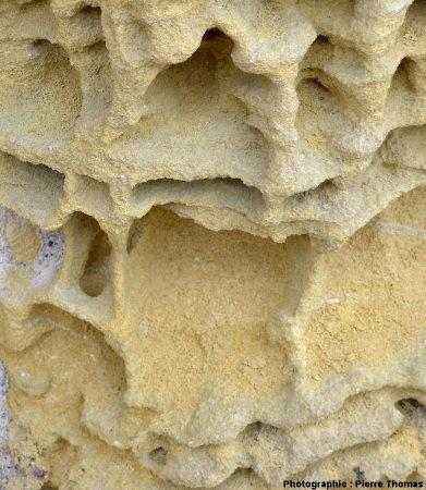 Gros plan sur l'érosion alvéolaire sur calcaire bioclastique, Chinon (Indre et Loire)