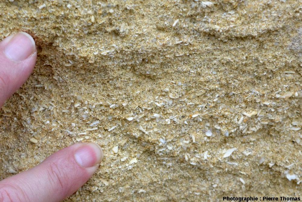 Gros plan sur la roche constituant l'affleueurement de Chinon: calcaire bioclastique mal consolidé