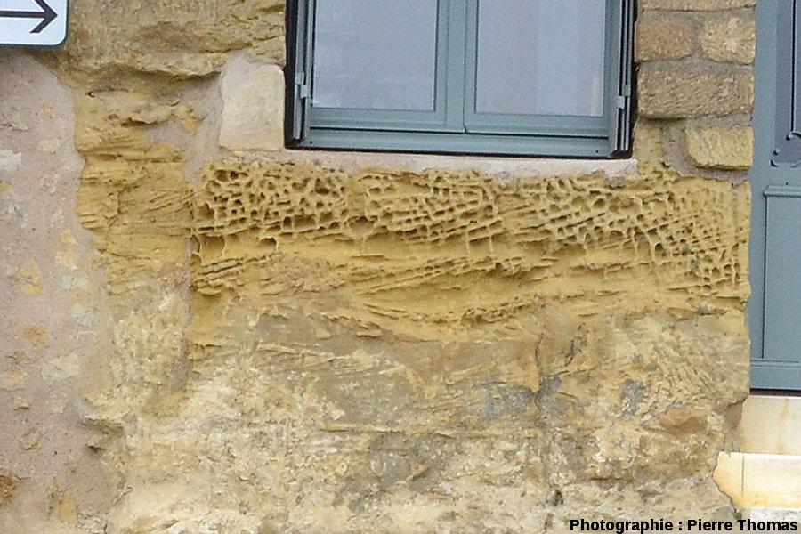 L'affleurement de calcaires bioclastiques à superbes taffonis sensu lato, Chinon (Indre et Loire)