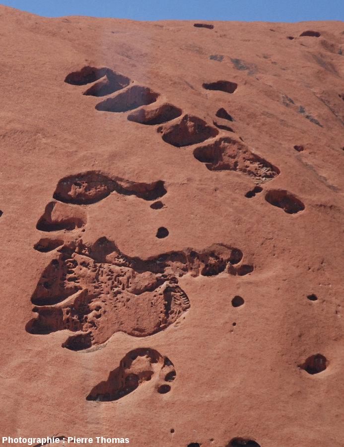 Taffonis affectant la face Nord-Est d'Uluru, Australie