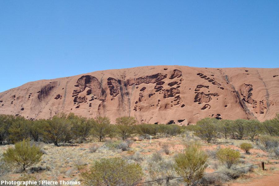 Vue, plus éloignée et de face, des taffonis de la face NE d'Uluru, Australie