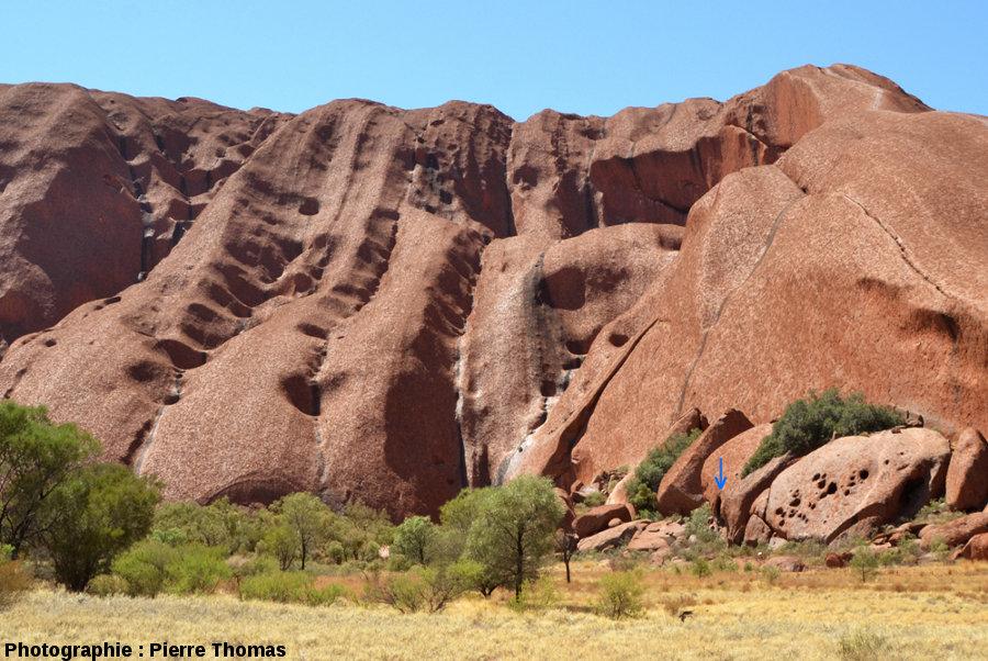 Vues de la face NO d'Uluru, montrant les taffonis alignés le long des couches très altérables/érodables