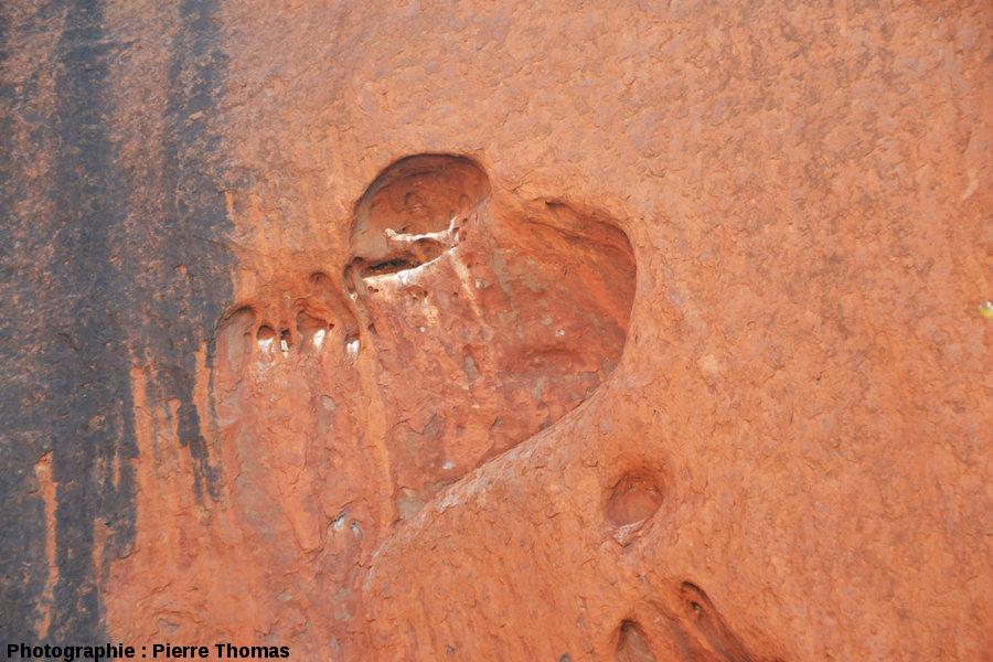 «Cœur d'Uluru», quand un taffoni devient amoureux et veut le faire savoir