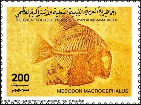 Timbre libyen représentant un poisson du groupe des Pycnodontes