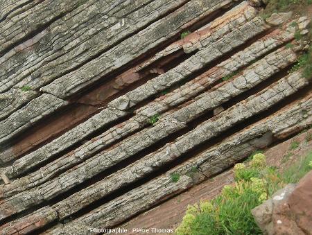 Zoom sur la partie inférieure de l'affleurement marno-calcaire de Zumaia (Espagne)