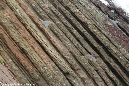 Détail d'un autre secteur de la côte de Zumaia, montrant le même type de double rythmicité sédimentaire