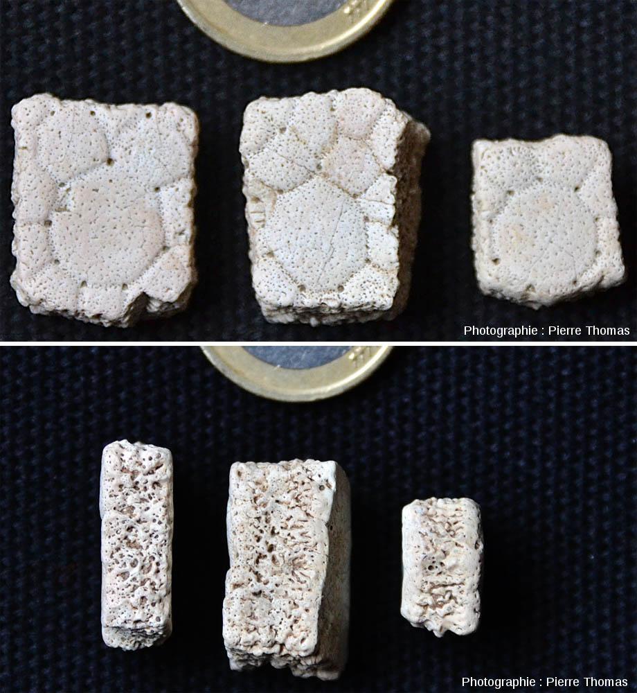 Trois fragments d'écailles de glyptodontidé vus de dessus (en haut) et par la tranche (en bas)