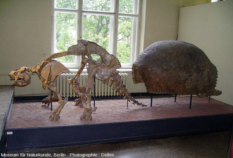 Le Glyptodon du Museum für Naturkunde de Berlin