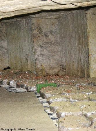 """Détail des bacs utilisés dans la champignonnière de Bourré pour la culture des champignons, ici le champignon de couche ou """"champignon de Paris"""" (= Agaricus bisporus)"""