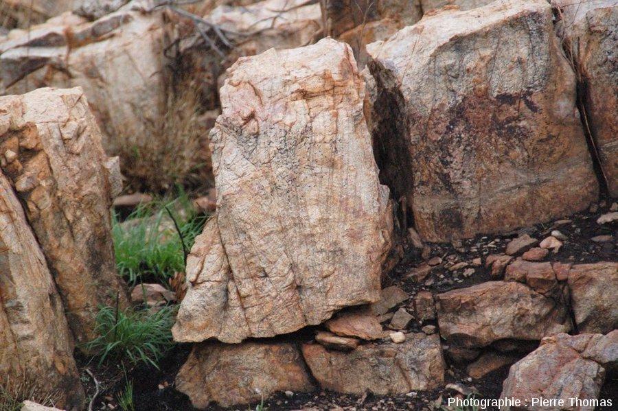 Figures sédimentaires servant de critère d'orientation dans les quartzites du substratum, site de Bobbejaanrant, Afrique du Sud