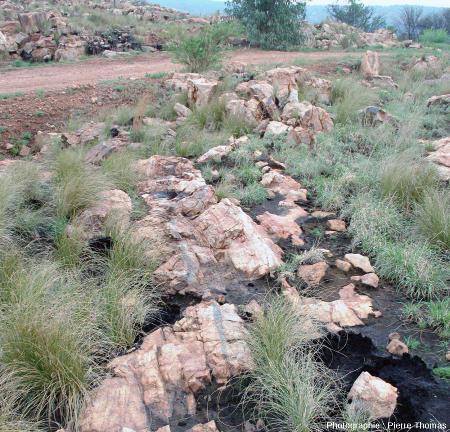 Vue globale sur une veine sombre de pseudotachylite, site de Bobbejaanrant, Afrique du Sud