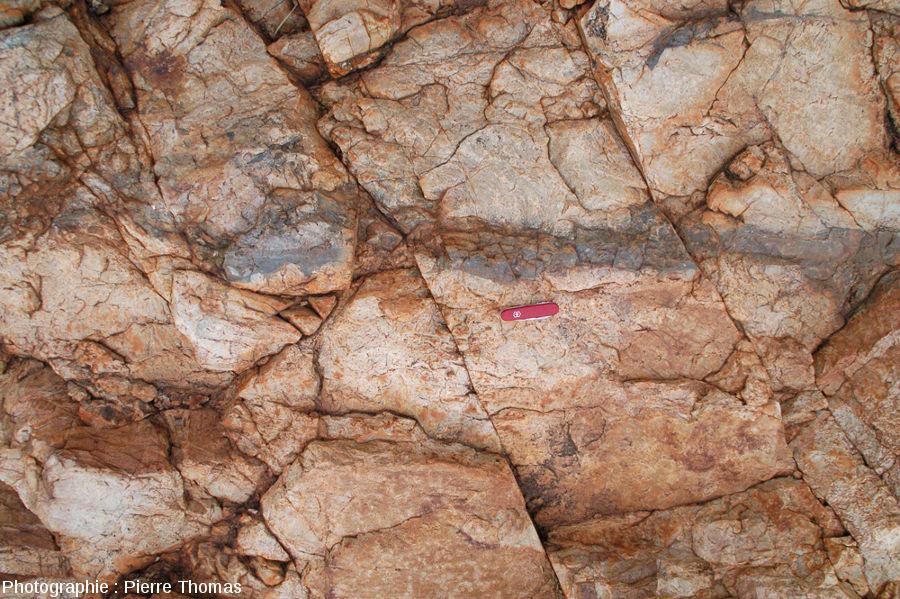 Une veine de pseudotachylite montrant que le liquide de fusion a envahi les irrégularités et ramifications de la fracture principale, site de Bobbejaanrant, Afrique du Sud
