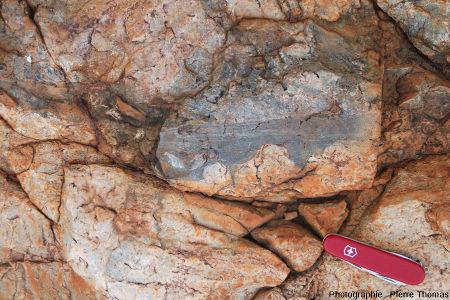 Zoom sur une veine de pseudotachylite montrant que le liquide de fusion a envahi les irrégularités et ramifications de la fracture principale, site de Bobbejaanrant, Afrique du Sud