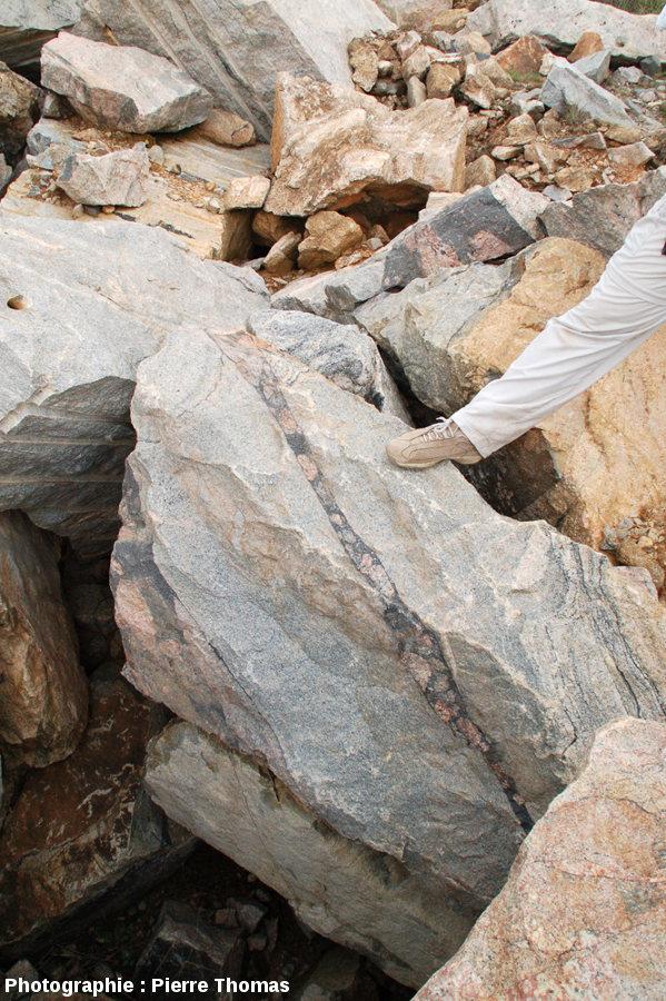 Vue d'ensemble sur un bloc de migmatite recoupé par une petite veine de brèche pseudotachylitique, carrière de Salvamento, région de Parys, Afrique du Sud