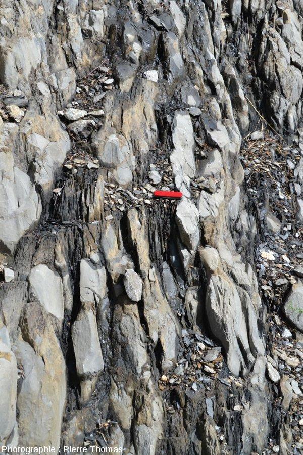 Vue rapprochée sur les alternances marno-calcaires liasiques au voisinage immédiat de la faille