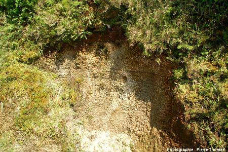Détail dans la nappe d'ignimbrites (non soudées) supérieure qui recouvre les flancs Ouest et Nord du volcan de l'île de Faial