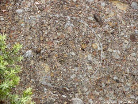 Coquille d'œuf de dinosaure dans le Rognacien de la région Provence-Languedoc
