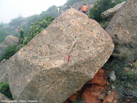 Bloc de Rognacien (bloc C) contenant deux œufs de dinosaure