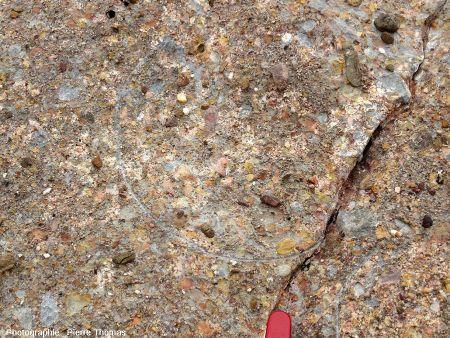 Œuf de dinosaure, partie gauche du bloc C