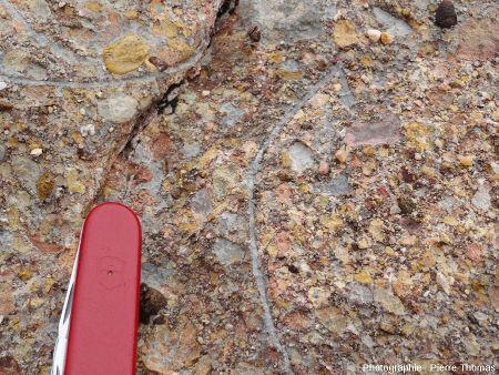 Œuf de dinosaure, partie droite du bloc C