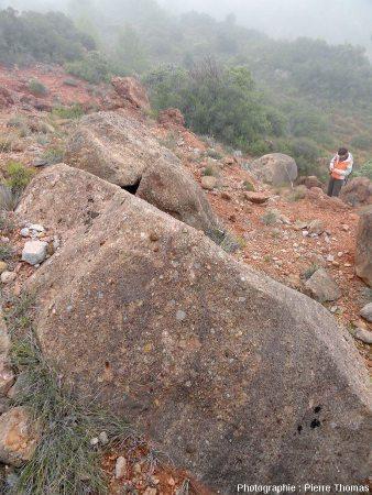Bloc de Rognacien (bloc D) contenant deux œufs de dinosaure