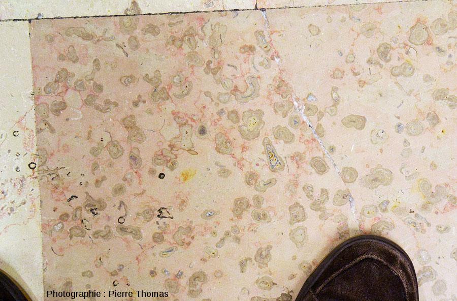 Une dalle très riche en oncolites (mini stromatolithes) dans un magasin du centre commercial de la Part-Dieu à Lyon