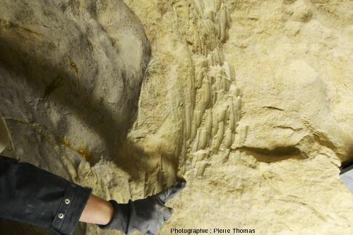 """Gros plan sur les """"coups de pioche"""" néolithiques ayant servi à extraire un rognonde silex dont on voit une partie de la contre empreinte à gauche"""