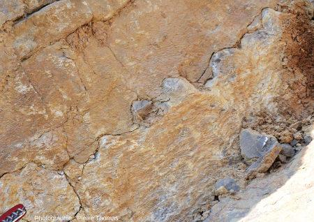 Zoom au sein des calcaires viséens de la Carrière du Boulonnais montrant in situ une section de couches stromatolithiques laminées devenant couches en dômes et boules dans sa partie supérieure