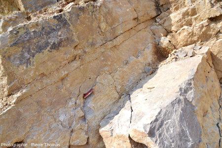Vue avec recul des calcaires viséens de la Carrière du Boulonnais montrant in situ une section de couches stromatolithiques laminées devenant couches en dômes et boules dans sa partie supérieure
