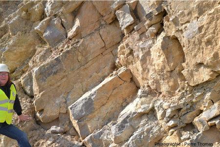 Affleurement de calcaires viséens de la Carrière du Boulonnais montrant in situ une section de couches stromatolithiques laminées devenant couches en dômes et boules dans sa partie supérieure